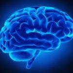 """La scoperta choc degli scienziati: """"Con questa spezia le prestazioni del cervello migliorano"""""""