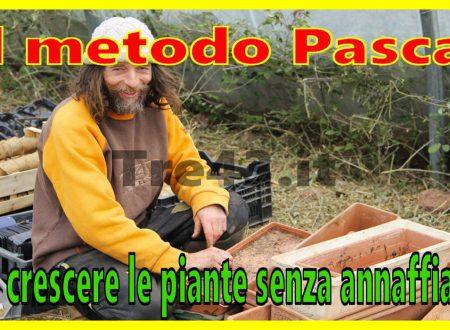 Il metodo Pascal per far crescere le piante ricche di nutrienti senza annaffiarle