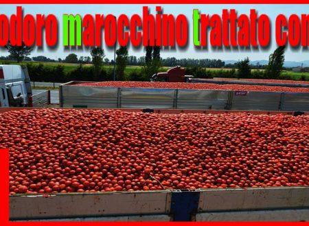 Pomodoro marocchino trattato con DDT e svenduto a soli 60 centesimi al kg. Dopo l' olio tunisino arriva anche il pomodoro africano!