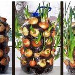 Coltivare Cipolle In Un Appartamento,ecco Come Farlo