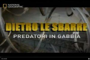 [National Geographic] Dietro le Sbarre – Predatori in gabbia