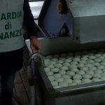 Mozzarelle di bufala: sventa l'ultima truffa dalla Gdf ,Provole affumicate coi volantini e latte con soda.