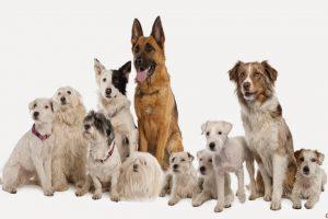 Test: Quale razza di cane ti somiglia di più?