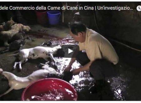 Il Crudele Commercio della Carne di Cane in Cina, Contenuti Forti (V.M18)