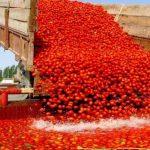 Mangiamo tutti Pomodoro CINESE [se non ci credi guarda il video]