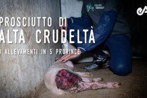 Il Prosciutto della Crudeltà – Un'indagine di Essere Animali