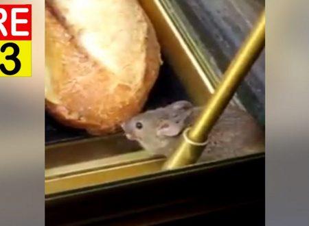 Il video del topolino Girato nel forno dell'aeroporto Charles De Gaulle – Francia