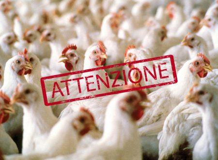 Parma – Aviaria, 850mila galline bruciate nell'inceneritore
