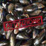 Allarme In Italia – Cozze in arrivo dalla Spagna contaminate con Escherichia Coli .