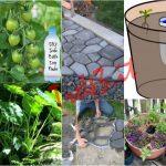 10 Sensazionali trucchi di giardinaggio.